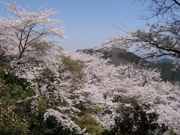 おにし文化スポーツネット|冬桜ファミリーハイキング